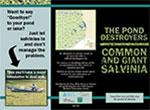giant-salvinia-brochure